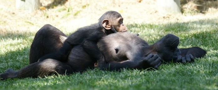 lisbon zoo, jardim zoologico lisboa,